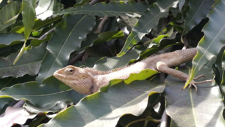 Close-up of lizard on leaves