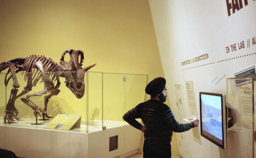 Dinosaur Dinosaur Bones Rom Royal Ontario Museum Sikh Toronto Turban
