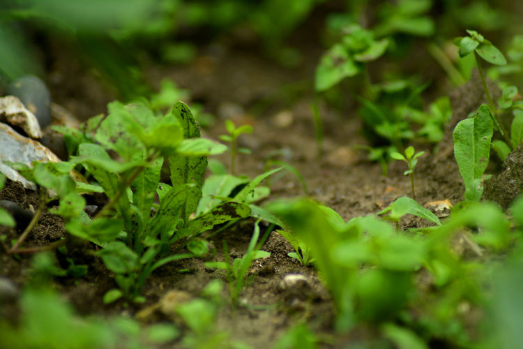 Beauty In Nature Close-up Day Dirt Freshness Green Color Growth Leaf Leaves Nature No People Outdoors Plant Selective Focus