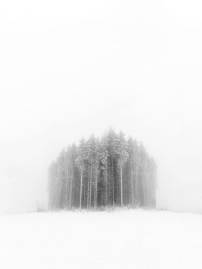 little forest Cold Temperature Winter Snow Nature Weather Fog Beauty In Nature