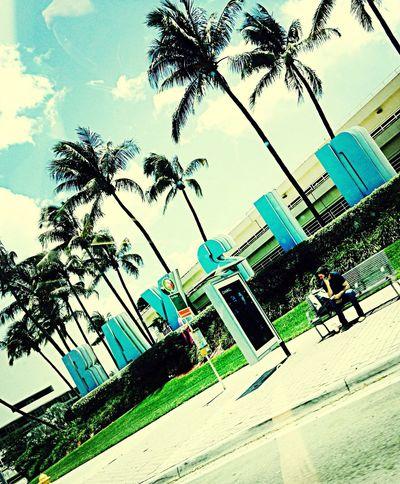 Bayside Miami Palm Trees Fresh Air Enjoying The Sun 305 Chilling