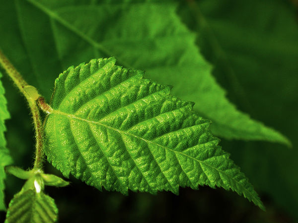 Beauty In Nature Close-up Day Focus On Foreground Fragility Freshness Green Color Growth Leaf Leaf Detail Nature No People Outdoors Plant