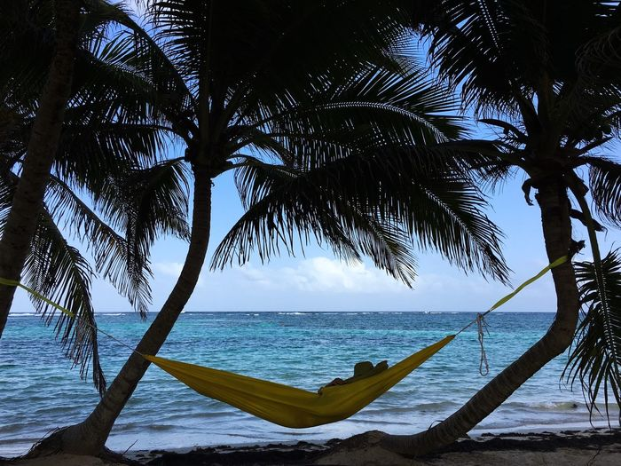 The Great Outdoors With Adobe The Great Outdoors - 2016 EyeEm Awards Palm Trees and Hammock with the Prettiest Background 🌴💚 the Ocean in Martinique