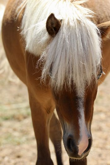 Close-up of a horse in the field