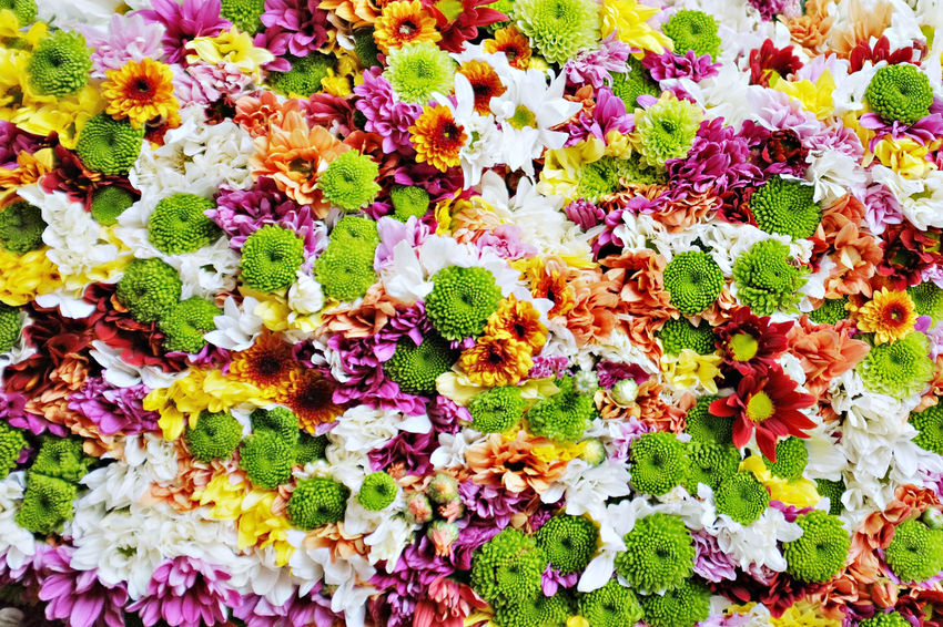 Assorted Flowers Backgrounds Beauty In Nature Close-up Flower Flower Head Flower Market Full Frame Leaf Multi Colored Nature Spring Variation