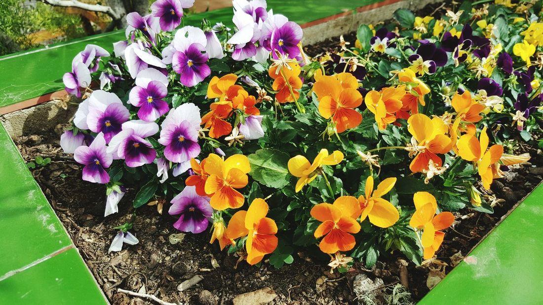 Colorful 🌸🍀🌹🌺🌷 Taking Photos Hello World Relaxing Enjoying Life Love Sunshine Happy EyeEm Best Shots Colorful Flowers EyeEm Nature Lover