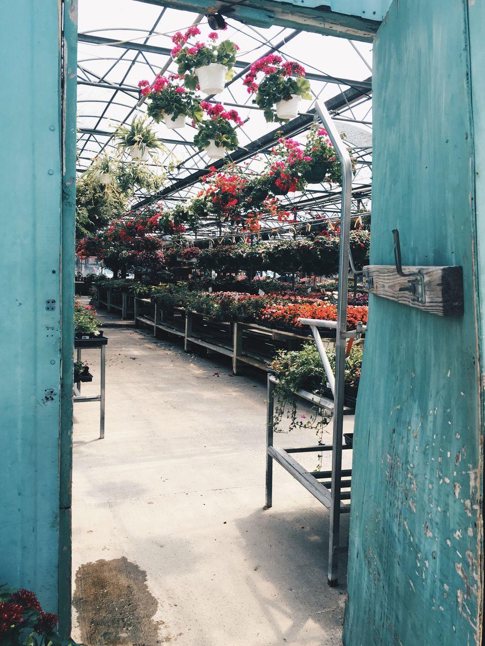 Colorful Flower Pots Growing In Plant Nursery Seen Through Door