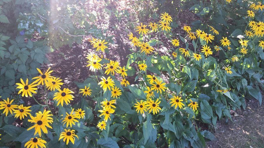 Nofilter Eye Em Nature Lover Morninglight Flowers