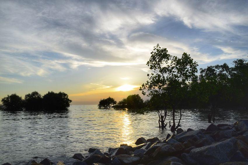 Sunset over Jeram beach, Selangor, Malaysia. Environment Tropical Plant Dusk Sunset Mangrove Nature Trees Landscape Beach Sea
