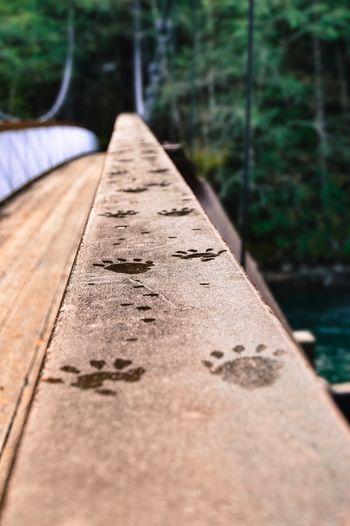 Pawprints on Bridge, North Cascades National Park, Washington, United States Paw Print Bridge
