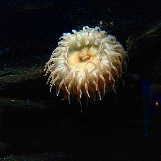 Sea Life Ocean Marine Life Anenome