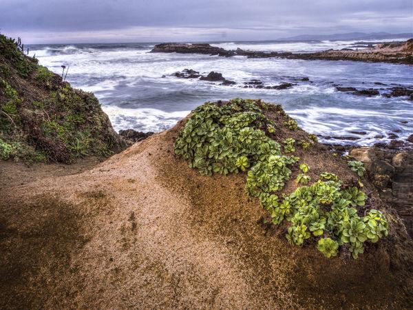 Crashing Waves  ICE PLANT Ice Plants Ocean Sunset Wave