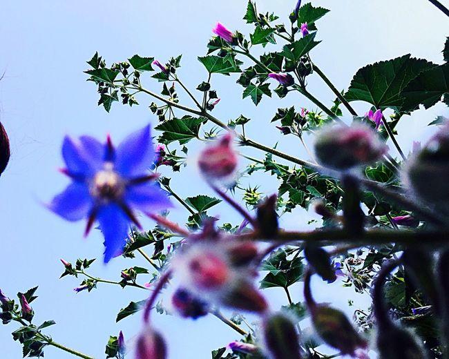 First flower Flower Blue Flower First Flowers Of Spring First Flower Blue Taking Photos Enjoy The Spring Spring Flowers Spring Spring Flower One Spring Day Nature's Diversities