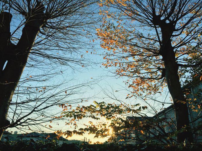 樹 夕方 落葉