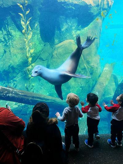 View of fishes swimming in aquarium