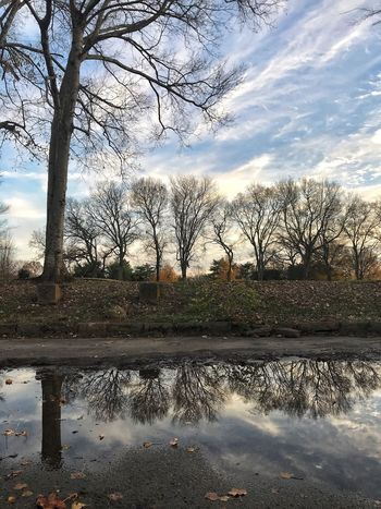 Blue skies and winter trees. Tree Bare Tree Cloud - Sky Water Sky Reflection No People Outdoors Day Scenics Landscape Nature Beauty In Nature Puddle Branch City Shades Of Winter