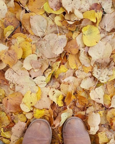 Under my feet Leaves Lifestyles Standing Leisure Activity Outdoors High Angle View Leaves On The Ground Forest Forestwalk Nature_perfection
