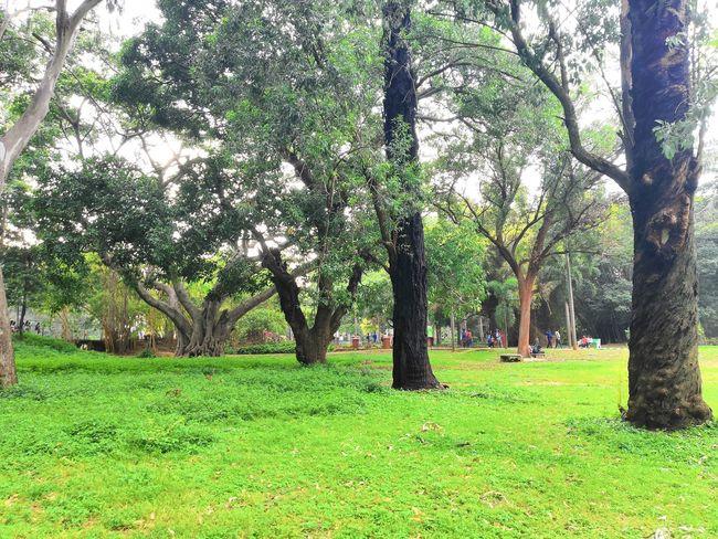 Tree Tree Trunk Branch Field Grass Landscape Green Color