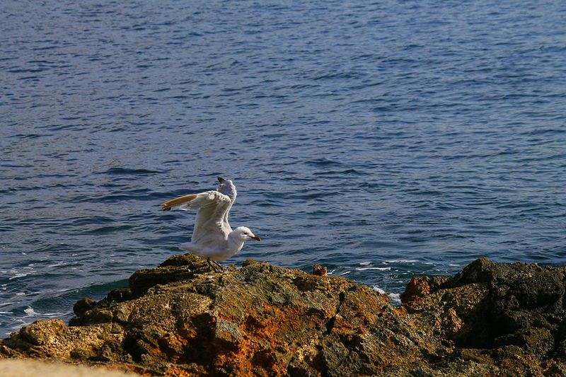 Birds Beach Photography Traveling Photography Ibiza Capture The Moment Working To A Brief Learn & Shoot: Working To A Brief
