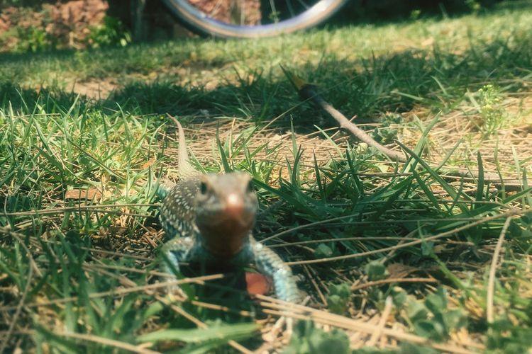 🦎 Grass Animal