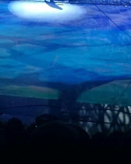 Nightlife Night Illuminated Arts Culture And Entertainment Circus Circusimages EyeEmNewHere