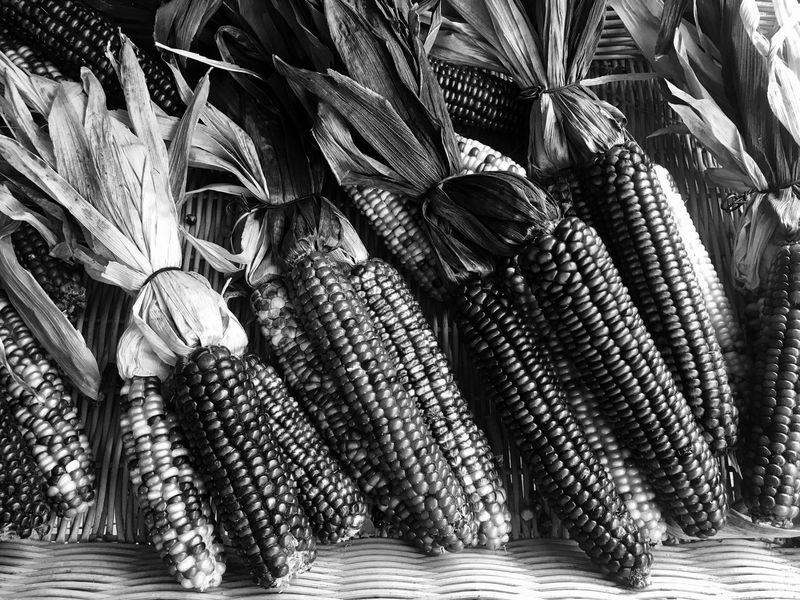 Indian corn No People Indoors  Close-up Food Day Freshness Nature Corn Maize
