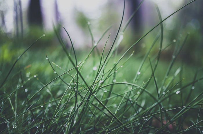 Dark Grass Water Drops Background Beauty In Nature Close-up Day Focus On Foreground Forest Photography Fragility Freshness Grass Growth Nature No People Outdoors Water
