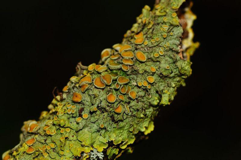 Close-up of leaf against black background