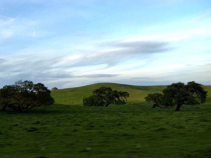 Nature Photography Nature Oak Oak Trees Green Green Hills Landscape Landscapes Hills Trees