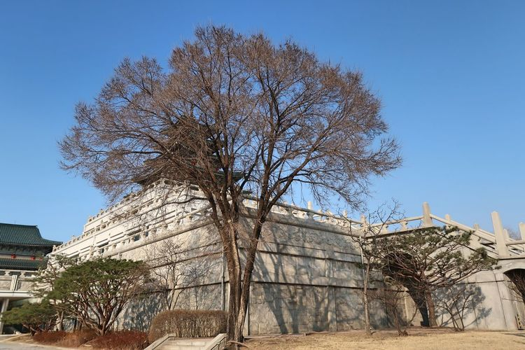 Low angle view of tree and building against clear blue sky