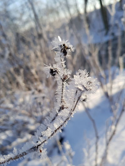 #ice Outdoors Snowflake Nature