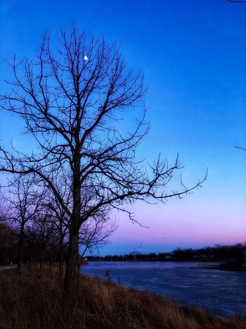 By the light of the Silvery Moon Moon Bare Tree Tree Nature Tranquility Beauty In Nature Tranquil Scene Blue Outdoors Branch Landscape Scenics Sky Lone Water Lake Sunset No People Clear Sky Day