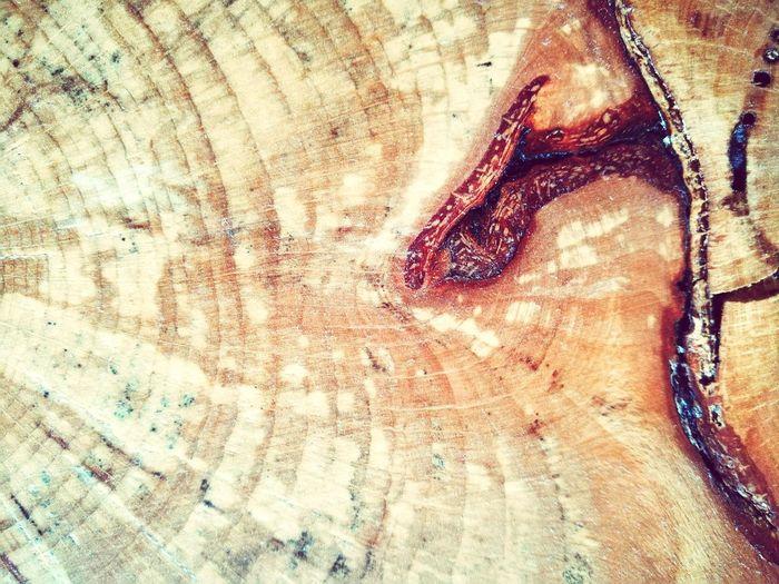 Veines Of Nature Tree Wood Full Frame