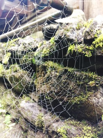 Natural Beauty Natural Architecture Spider Web Beauty In Nature The Week On EyeEm