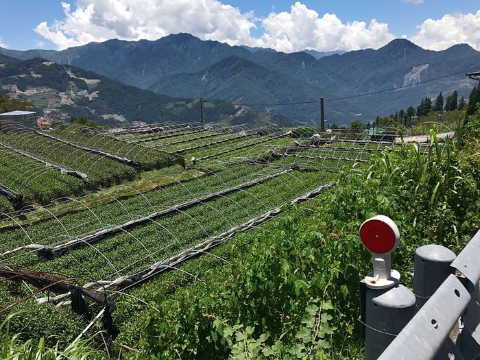 Agriculture Mountain Field Farm Landscape Rural Scene Growth Green Color Beauty In Nature Day Outdoors Scenics Nature Cloud - Sky Mountain Range Plant Sky No People Grass Terraced Field Tea Garden Clouds And Sky Blue Sky
