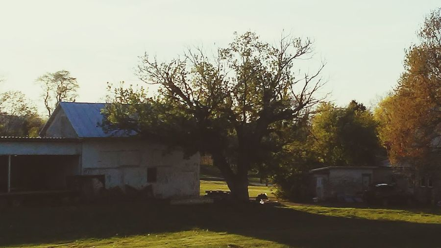 Farm Tree Shadow Outdoors Architecture No People Day Grass Shadows & Lights Light In The Darkness Backgrounds Atmospheric Mood Sunset Nature Random Shot Beauty In Nature Full Frame Plants Plant Agriculture Growth Landscape_photography Floral Photography Autumn Grass Green Color Built Structure Building Exterior Sky