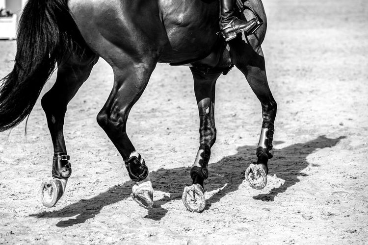 Equestrian, horse jumping competition, show jumping themed photograph.