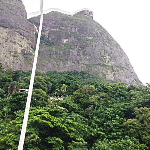 Tijuca's Forest