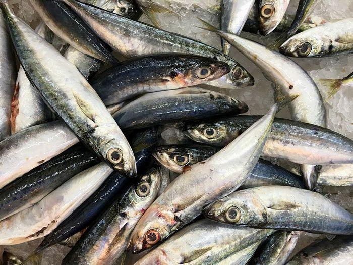 Close-up of sardines on ice