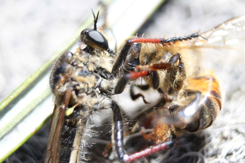Once in a life time Insect Animal Themes Close-up Animals In The Wild Nature Outdoors Pecking Order
