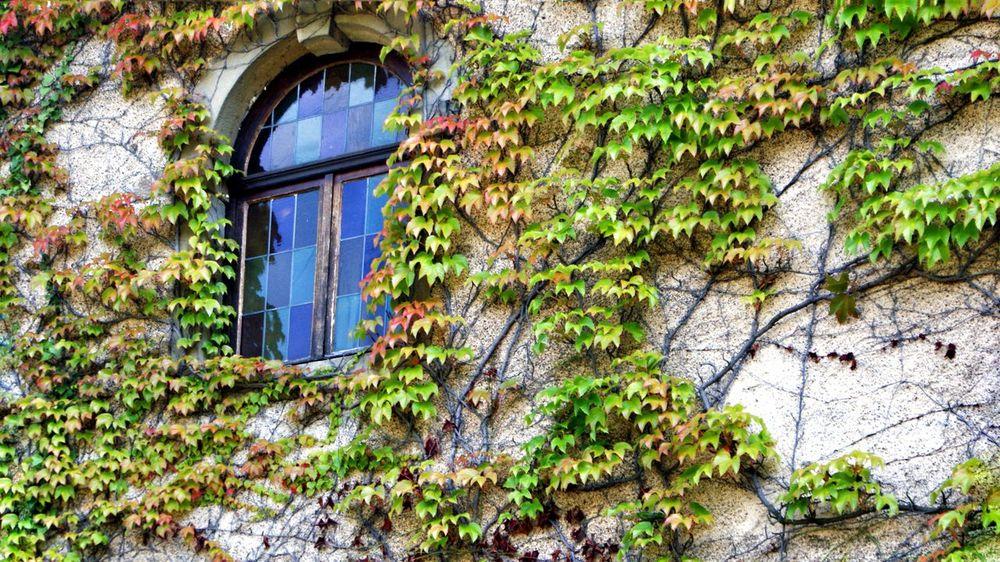 Windows Reflections Old House Flowers,Plants & Garden Colours France Walking Street Life Green Green Green!  Enjoying Nature