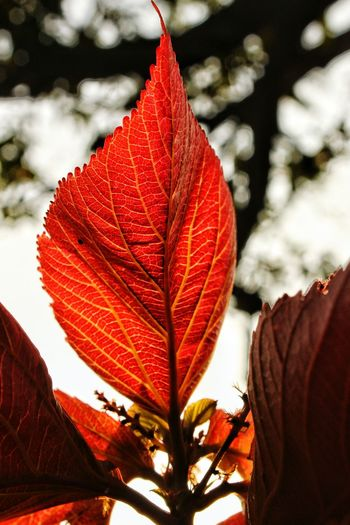 Be like a tree and let the dead leaves drop🍃🍂🍂 Deapth Of Field Against The Light DSLR Photography HDR Sharp Still Life Delhi Red Leaf Autumn Flower Plant Nature No People Growth Outdoors Beauty In Nature Sky Tree Close-up Shades Of Winter