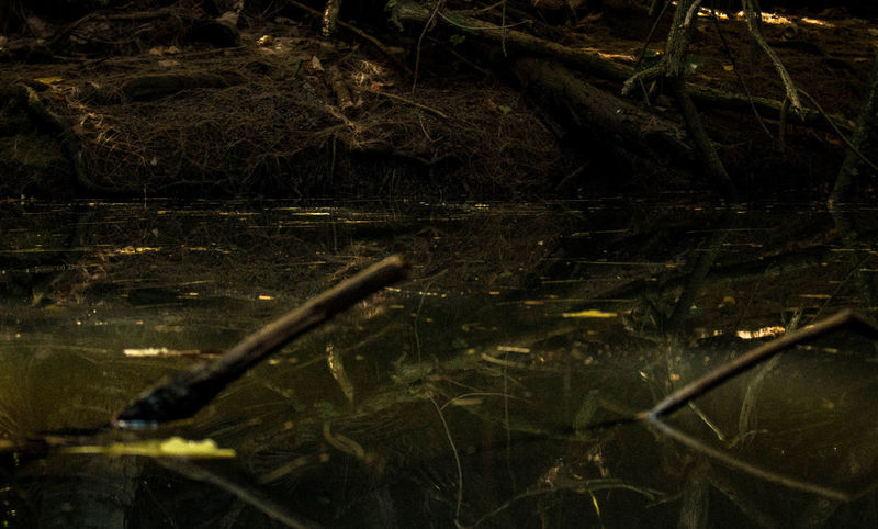 Dark and dirty stagnant water in the middle of the jungle. Nature Outdoors Stagnant Water Jungle Hawaii Outdoors Photograpghy  Beauty In Nature Fragility Landscape Low Angle View