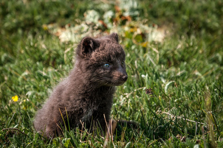 Young mammal on field