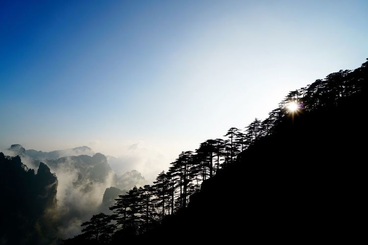 Trees on mountain against blue sky