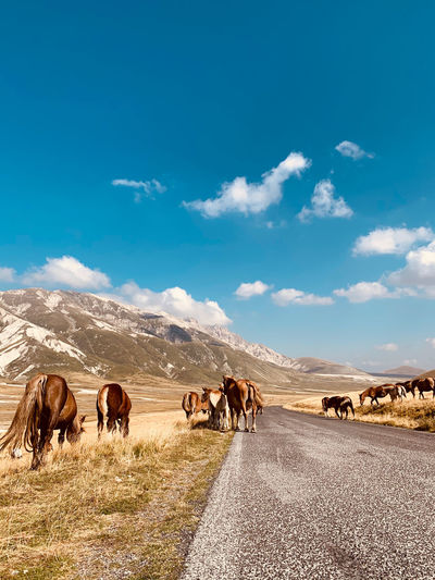 View of horses on road