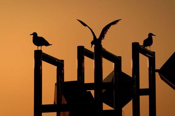 Sunset Bird Birds Sunsets Tokyo Sunset_collection Japan Blackheaded Gull
