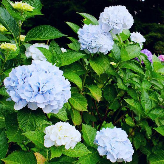 2017.07.07 静岡県 御殿場市 二岡神社 周辺