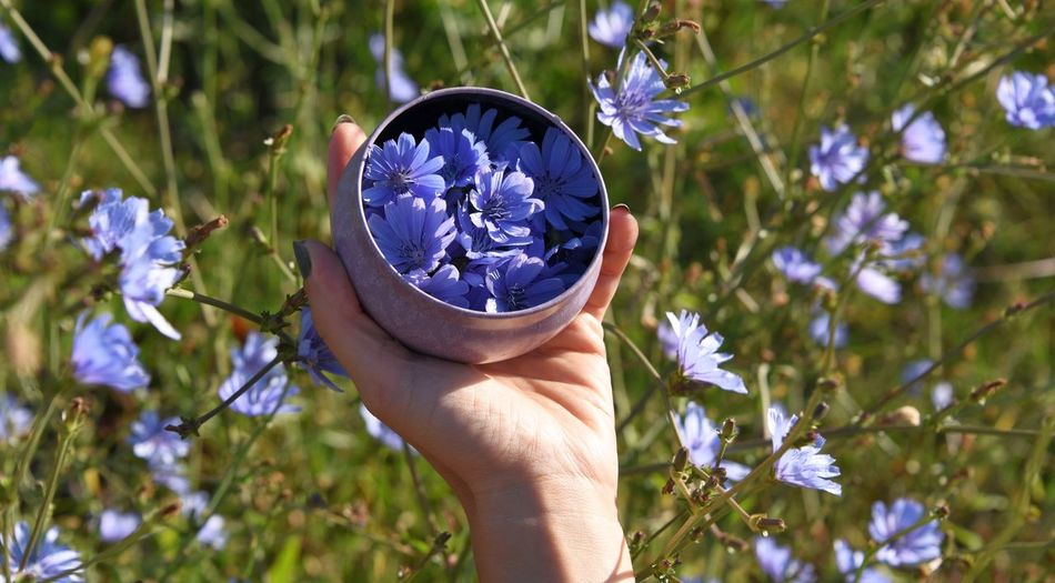 Cropped hand holding container of blue flowers by plant