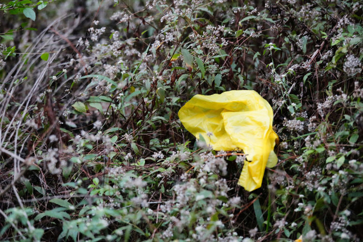 Contamination Plastic Bag Beauty In Nature Flowering Plant Forest Floor Fragility Outdoors Plant Plastic Pollution Springtime Vulnerability  Yellow End Plastic Pollution
